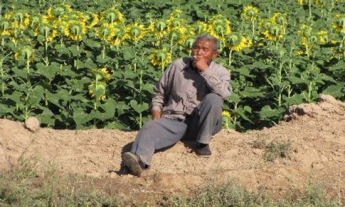 Zdjęcie CHINY / NE Chiny / Huang He / owce moga poczekac, turysci nie czest to zagladaja