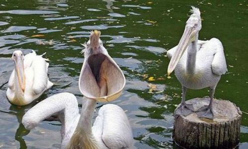 Zdjecie CHINY / - / - / Gdzie moja rybka?
