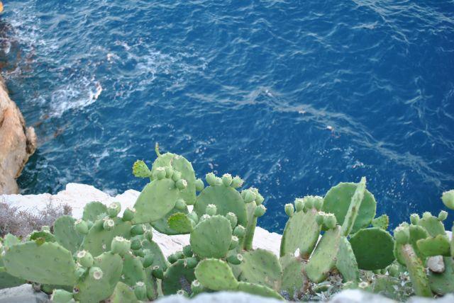 chorwacja tanie noclegi apartamenty widokiem na morze istria