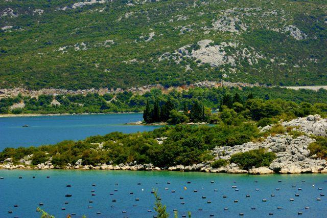 Zdjęcia: Chorwcaja, Chorwcaja, Chodowla  muli , CHORWACJA