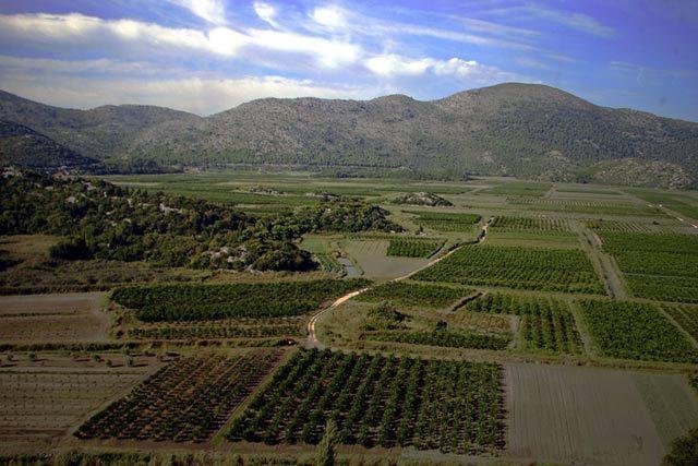 Zdj�cia: Plantacja drzew cytrusowych, Dalmacja, Plantacja drzew cytrusowych, CHORWACJA