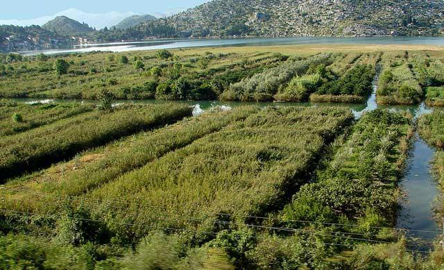 Zdjęcia: plantacje cytrusów, Dalmacja, ...., CHORWACJA