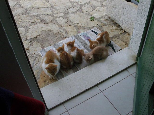 Zdjęcia: Primosten, Dalmacja, Koty, CHORWACJA