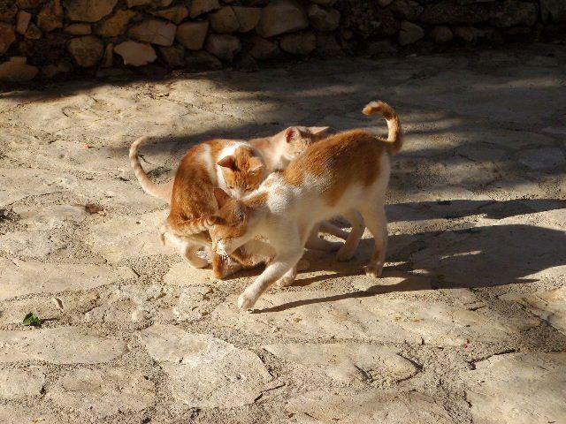 Zdjęcia: Primosten, Dalmacja, Koty c.d., CHORWACJA