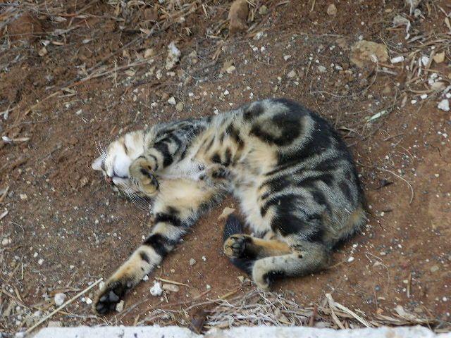 Zdjęcia: Wyspa Mljet, Dalmacja, Koty c.d., CHORWACJA
