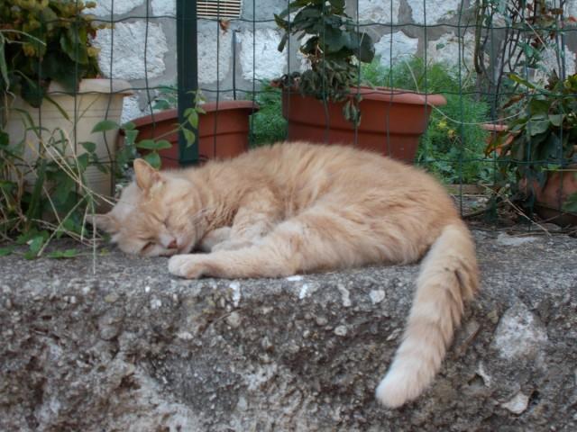 Zdjęcia: Chorwacja, Bałkany, Dubrownik - kot, CHORWACJA