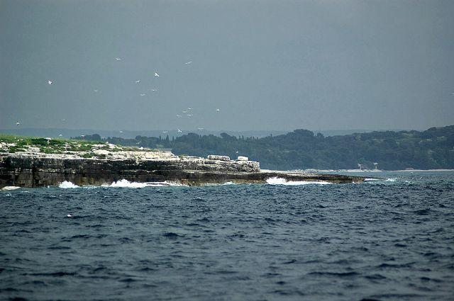 Zdjęcia: wyspy Brijuni, Istria, mewy nad wyspą, CHORWACJA