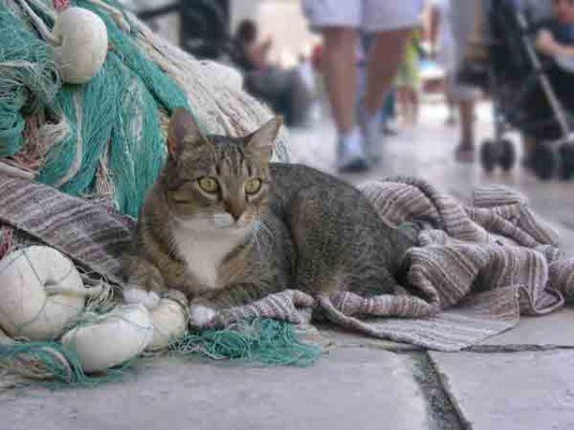 Zdjęcia: Dubrownik, Kot, CHORWACJA