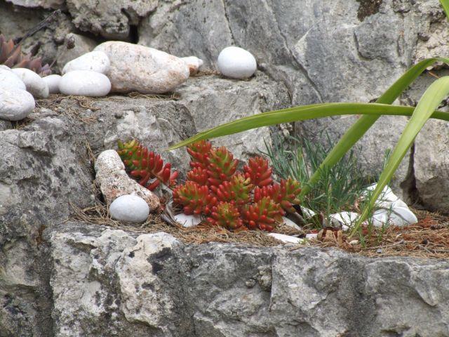 Zdjęcia: Baska Voda, Makarska, ....zycie..., CHORWACJA