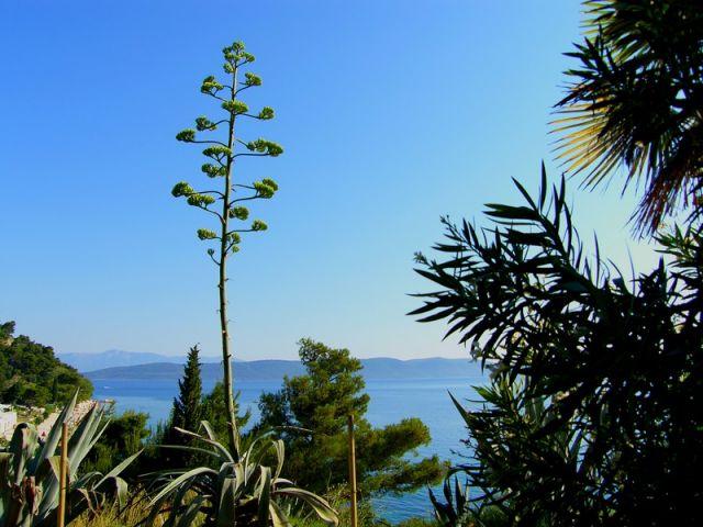 Zdjęcia: Zivogosce, Dalmacja, agawowo, CHORWACJA