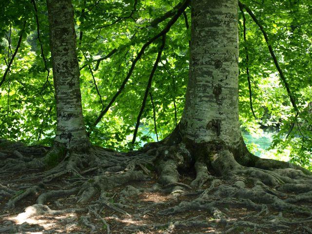 Zdjęcia: park, plitvice, Trzeba utrzymać się podłoża, CHORWACJA