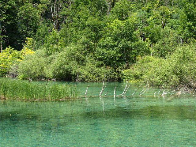 Zdjęcia: park, plitvice, inny kolor wody, CHORWACJA
