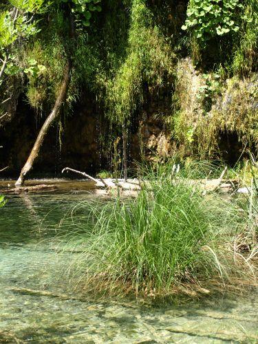Zdjęcia: park, plitvice, kępka trawy, CHORWACJA