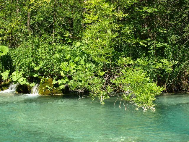 Zdjęcia: park, Plitvice, umoczyć gałązkę, CHORWACJA