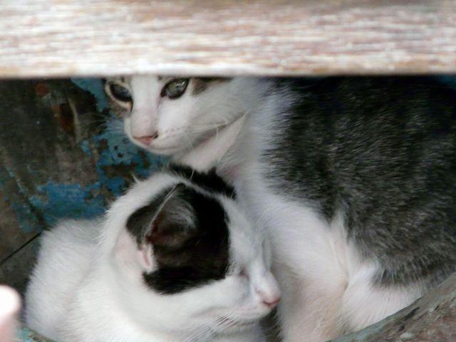 Zdjęcia: Dubrownik, Dalmacja, Kocia rodzina w łodzi, CHORWACJA