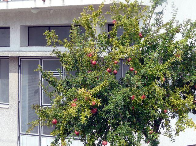 Zdjęcia: Trogir, Dalmacja, Granaty pod oknami, CHORWACJA
