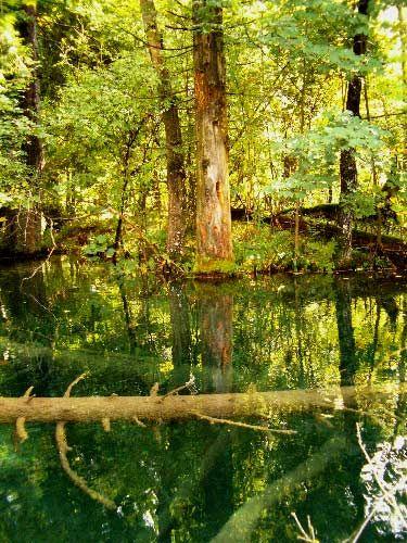 Zdjęcia: P.N. Jezior Plitwickich, Park pod wodą, CHORWACJA