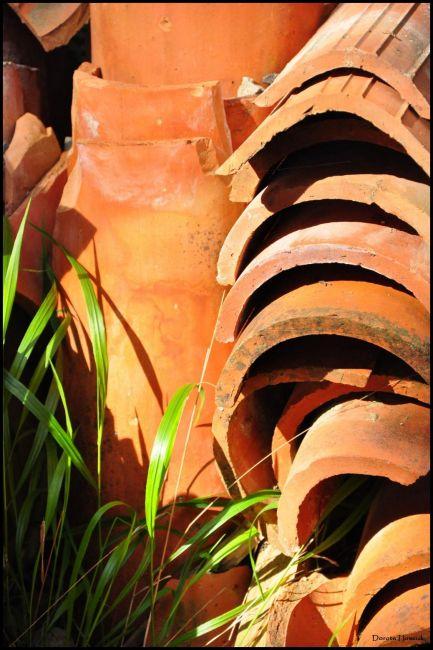 Zdjęcia: Lokrum, Dalmacja, Make it orange ..., CHORWACJA