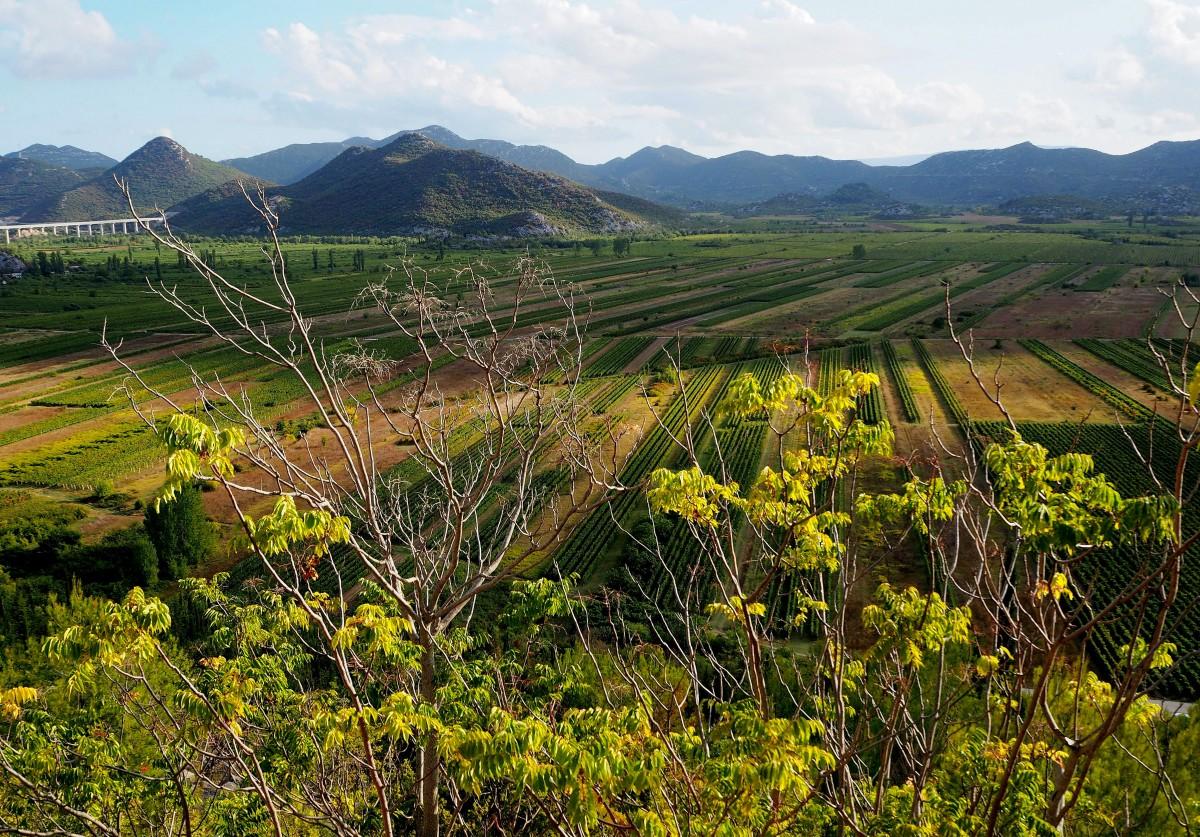 Zdjęcia: Kobiljaca, Dubrovacko-Neretvanska zupanija, żyzna dolina..., CHORWACJA