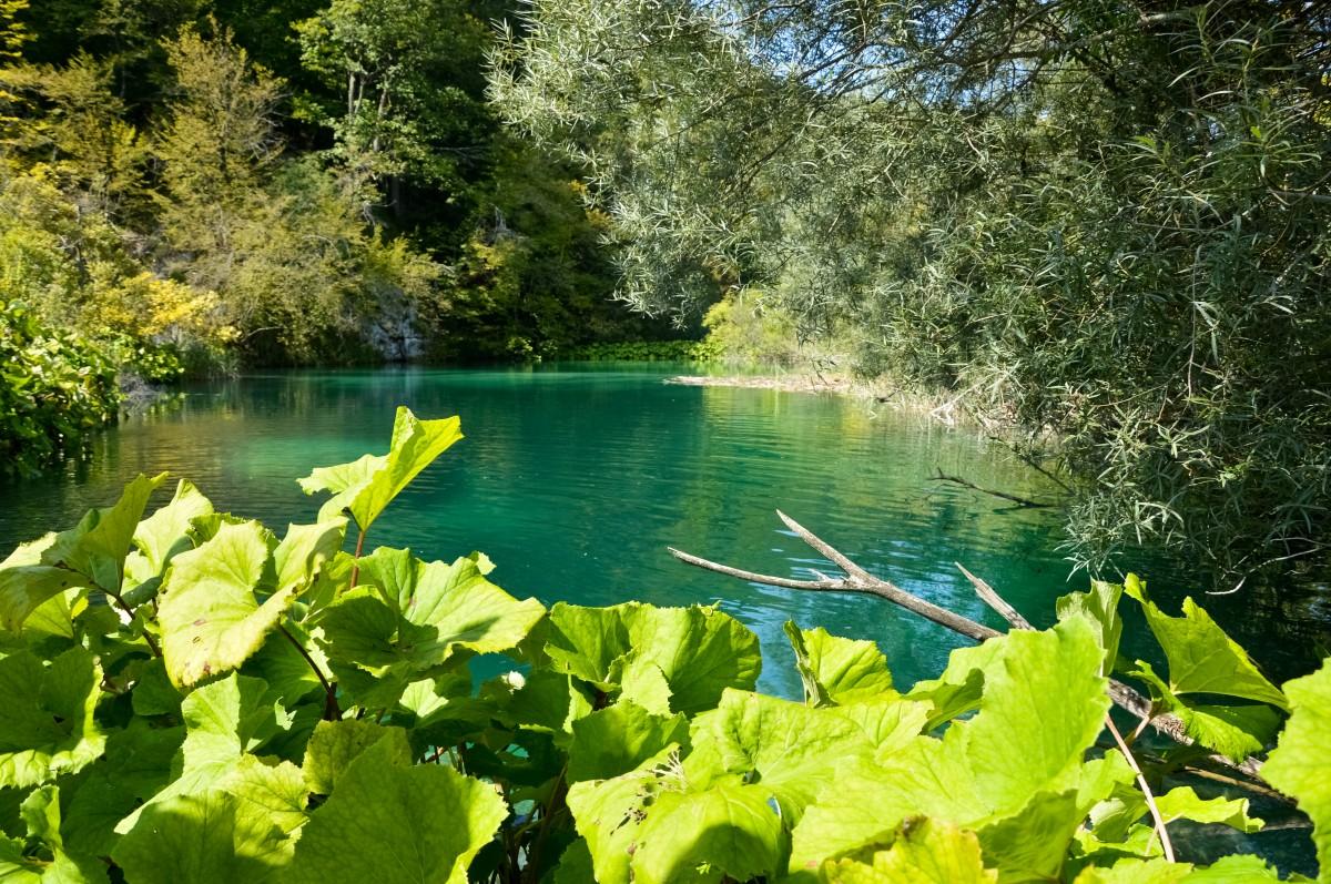 Zdjęcia: Park Narodowy Jezior Plitwickich, Fifty Shades Of Green!, CHORWACJA