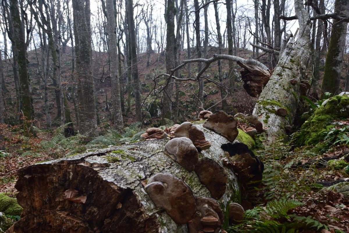Zdjęcia: Park Narodowy Plitwickie Jeziora, Środkowa Chorwacja, Hubiasta kłoda, CHORWACJA