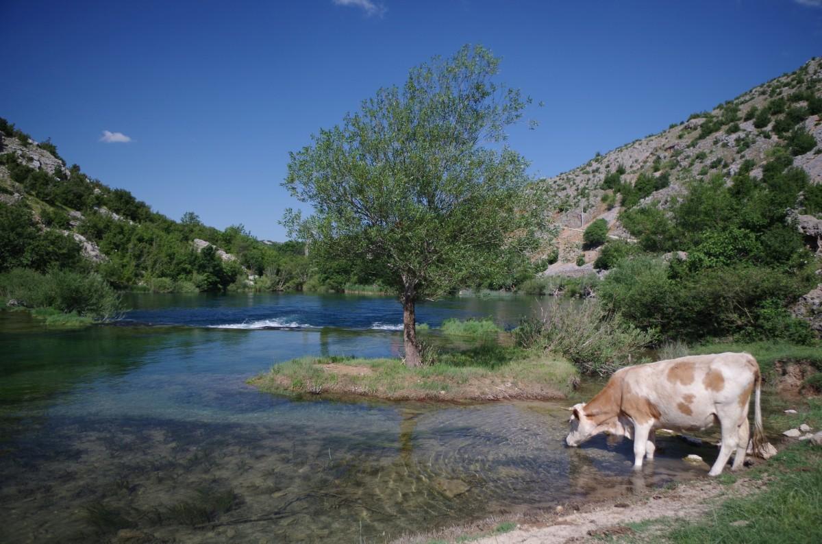 Zdjęcia: Rzeka Krupa, Kanion rzeki Krupa, Covidowa bezludna Chorwacja, CHORWACJA