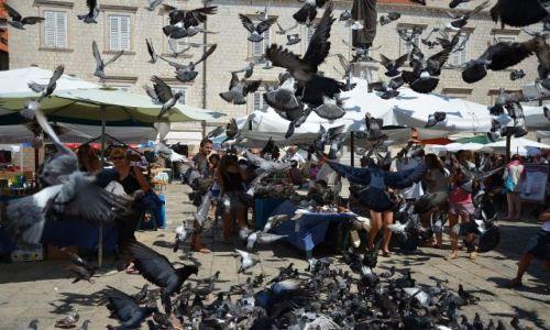 Zdjęcie CHORWACJA / -Dalmacja / Dubrownik / Nalot dywanowy