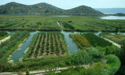 Zdjęcie CHORWACJA / Split / pod Splitem / Rozlewisko rzeki Neretwy 1