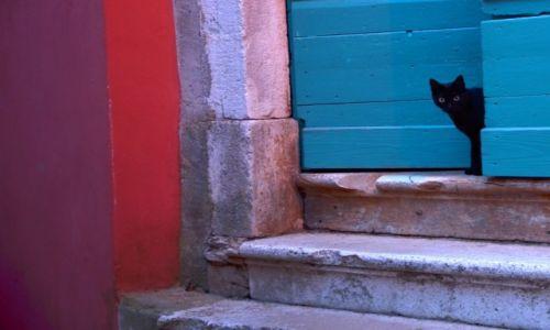 Zdjęcie CHORWACJA /  Półwysep Istria / Rovinj / Koteczek