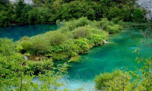 Zdjecie CHORWACJA / środkowa Chorwacja / Park Narodowy Jezior Plitwickich / odcienie zieleni...