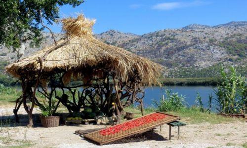 Zdjecie CHORWACJA / Dalmacja / pola nad Neretwą / w południowym słońcu...