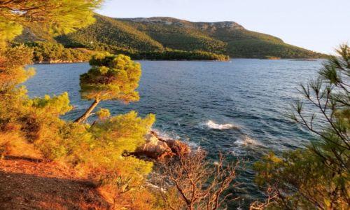 Zdjęcie CHORWACJA / Półwysep Pelješac / Žuljana / wśród piniowych drzew i aromatycznych ziół...