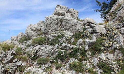 CHORWACJA / Masyw Biokovo / Park Przyrodniczy Biokovo, Ogród Botaniczny Kotiśina / Kwitnąca i pachnąca skała
