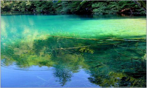 Zdjecie CHORWACJA / środkowa Chorwacja / Park Narodowy Jezior Plitwickich / melanż kolorów...