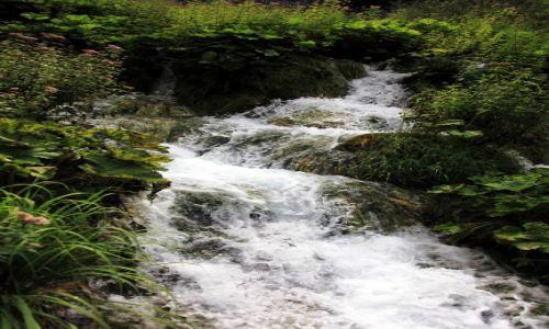 Zdjęcie CHORWACJA / Żupanja Licko-Senjska / Park Narodowy Jezior Pitwickich / Żywioł