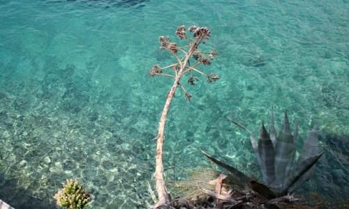 Zdjęcie CHORWACJA / Dalmacja / Bol / Adriatyk i agawa