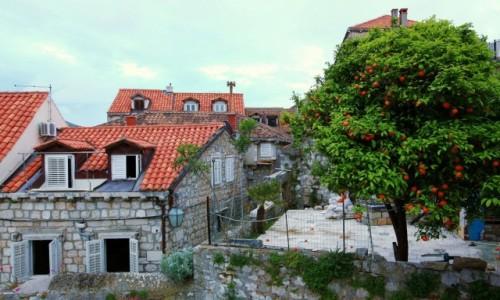 CHORWACJA / Po�udniowa Dalmacja / Dubrovnik / Drzewko pomara�czy