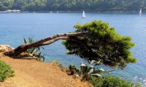 CHORWACJA / po�udniowa Dalmacja / Cavtat / ona te� lubi morze...