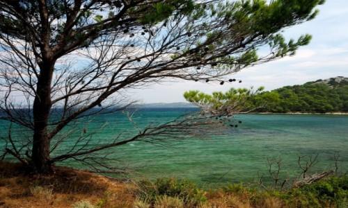 Zdjęcie CHORWACJA / środkowa część Chorwacji / wyspa Vrgada / Chorwacki widoczek