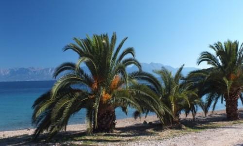 Zdjęcie CHORWACJA / Trpanj / Trpanj / Wybrzeże chorwackie