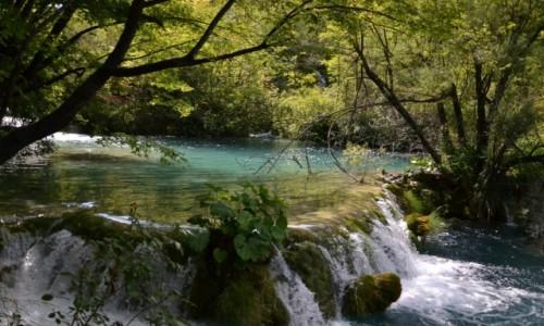 Zdjęcie CHORWACJA / Żupania Licko-Senjska i Karlovacka  / Park Narodowy Jezior Plitwickich / Jeziora Plitwickie III