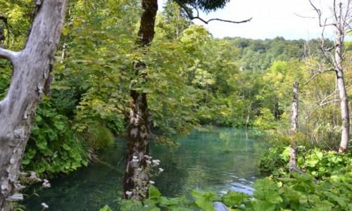 Zdjecie CHORWACJA / Żupania Licko-Senjska i Karlovacka  / Park Narodowy Jezior Plitwickich / Jeziora Plitwickie IV