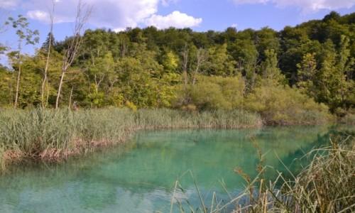 Zdjęcie CHORWACJA / Żupania Licko-Senjska i Karlovacka  / Park Narodowy Jezior Plitwickich / Jeziora Plitwickie V