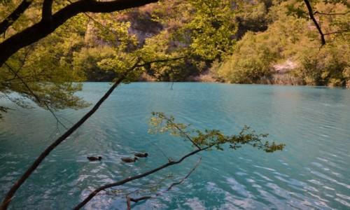 Zdjęcie CHORWACJA / Żupania Licko-Senjska i Karlovacka / Park Narodowy Jezior Plitwickich / Jeziora Plitwickie