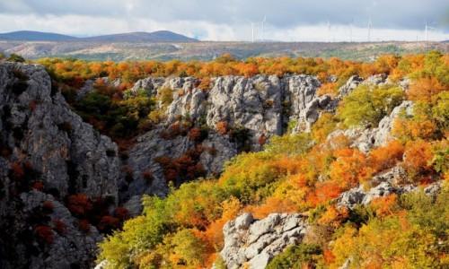 Zdjecie CHORWACJA / Dalmacja środkowa / Zadvarje / trochę jesiennie...