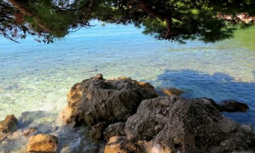 Zdjecie CHORWACJA / Riviera Makarska / Brela, Punta Rata / pod pachnącym parasolem...