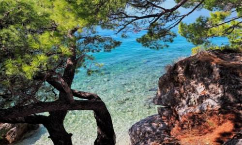 Zdjecie CHORWACJA / Riviera Makarska / Brela, Punta Rata / piniowe światłocienie...