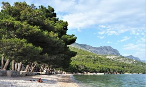 Zdjecie CHORWACJA / Dalmacja / Riviera Makarska / słodki smak wakacji...