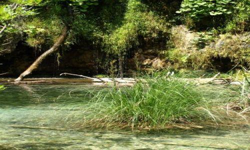 Zdjęcie CHORWACJA / plitvice / park / kępka trawy