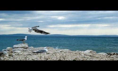 Zdjecie CHORWACJA / Dalmacja / Podstrana k.Splitu / Chorwackie mewy